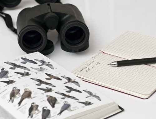 Lovers Key Birding Tips