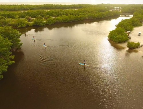 A Beginner's Guide to Stand up Paddle Boarding in Lover's Key