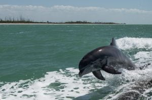 top-5-family-friendly-activities-in-fort-myers-beach