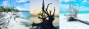 Delight in the Eerily Beautiful Driftwood of Lovers Key