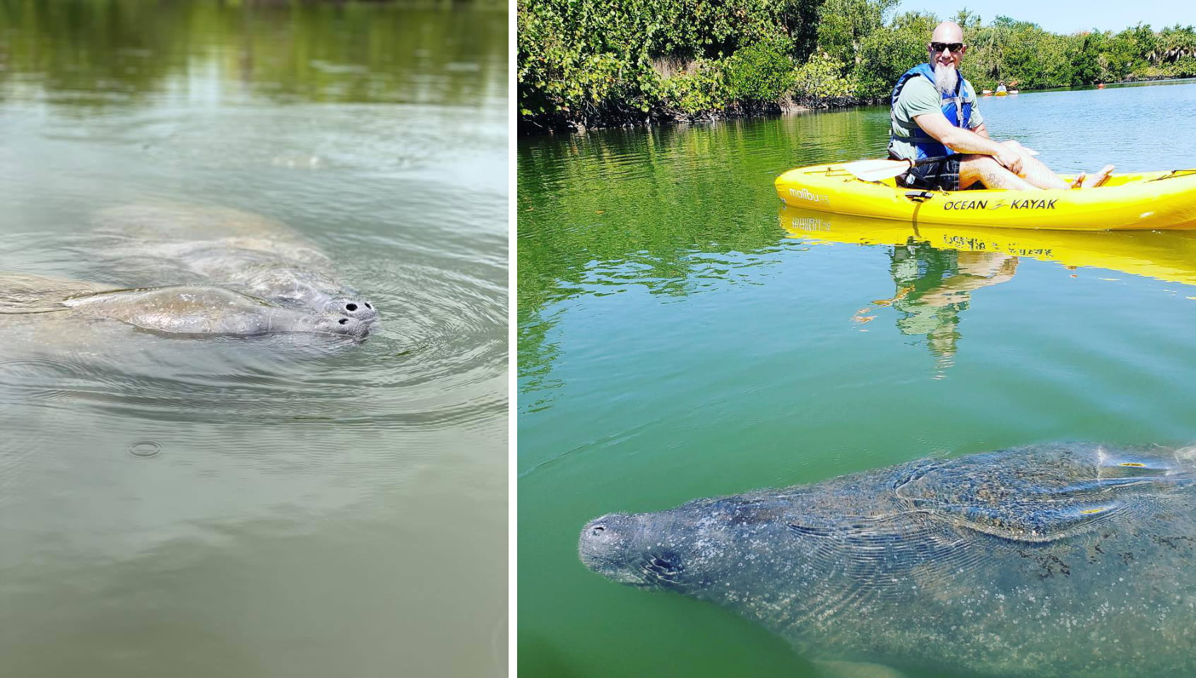 Lovers Key Adventures: Fun Facts About Manatees