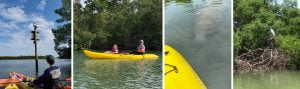 What Is Kayaking? Best Season And Location In Southwest Florida