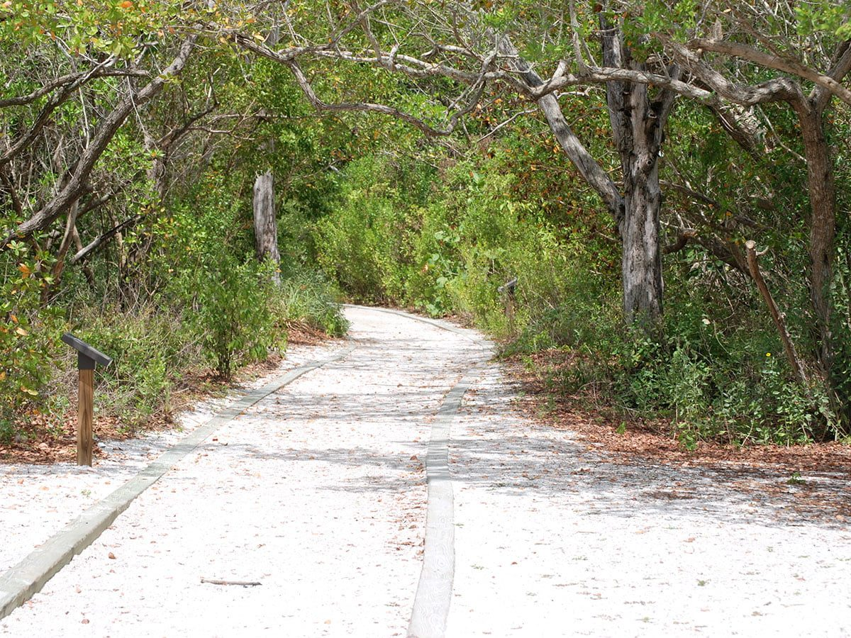 Beautiful Florida Estuary Trail