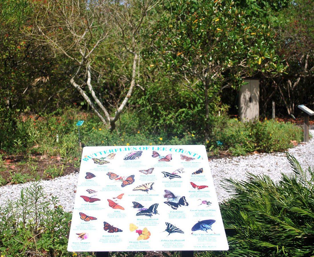 Butterflies of Lee County Florida