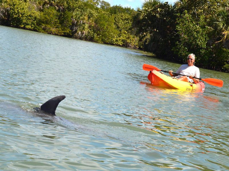 Dolphin Spotting Fort Myers Beach