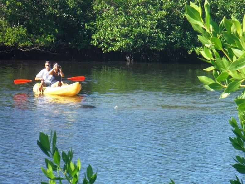 Kayak Tours Fort Myers Beach