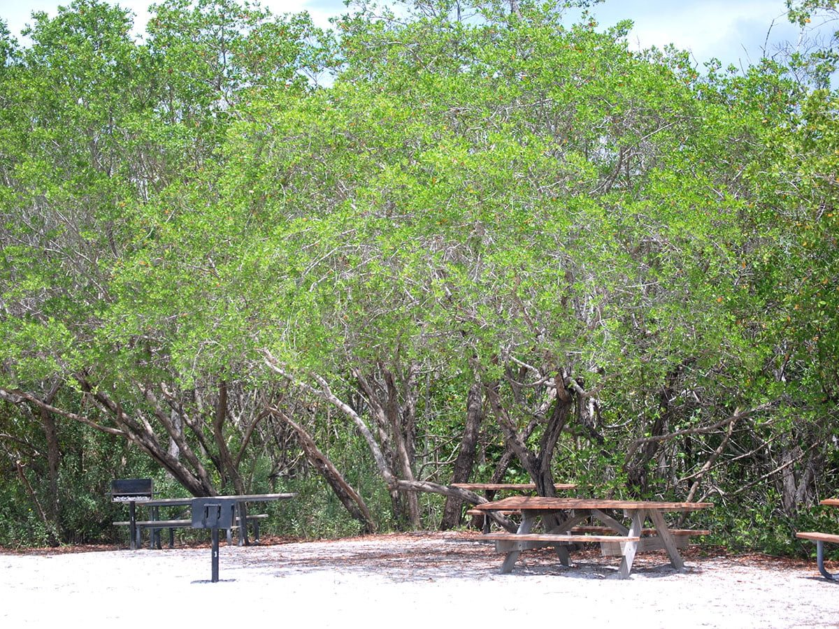 Picnic and Barbeque Spots Near Florida Beaches