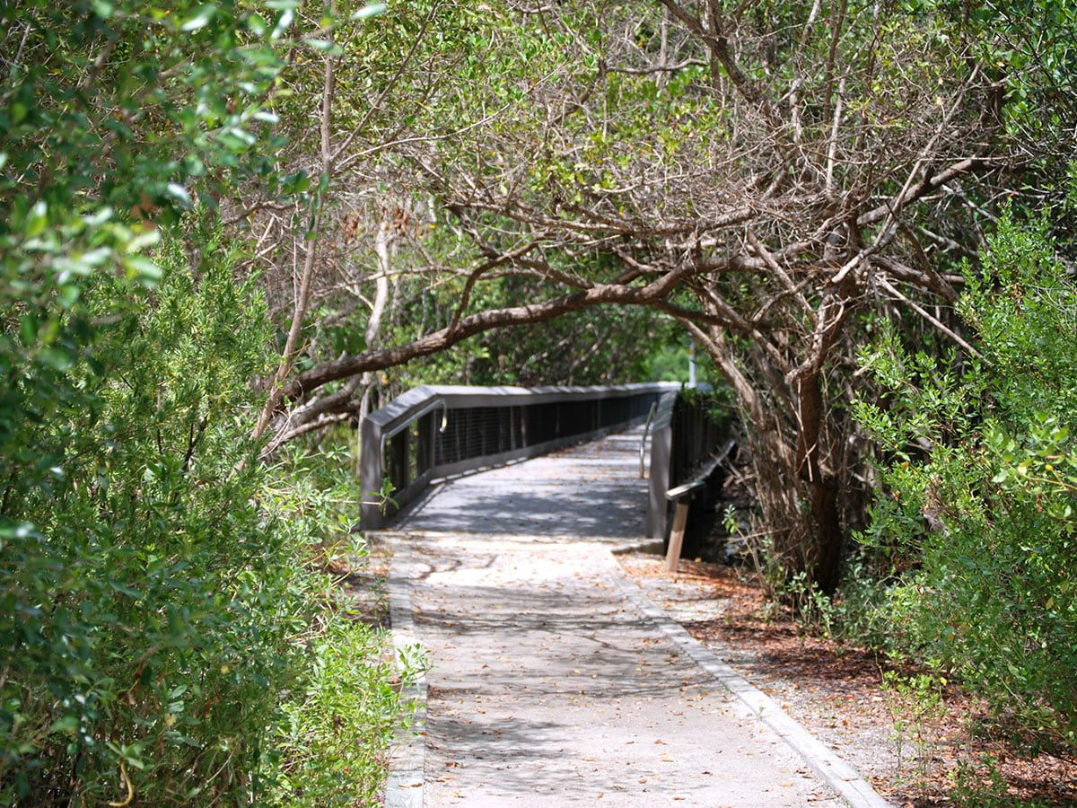 Scenic Florida Pathway Through Trees and Mangroves