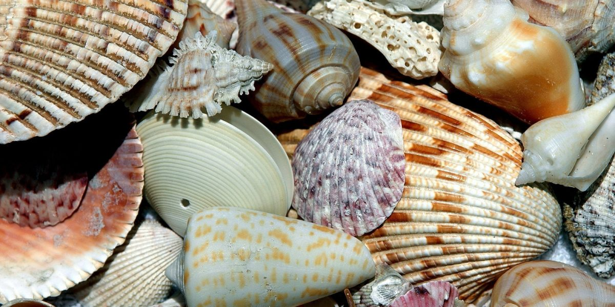 Shelling Guide in Lovers Key, Florida.