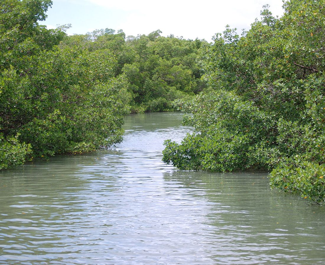 Water Trails in Lovers Key State Park
