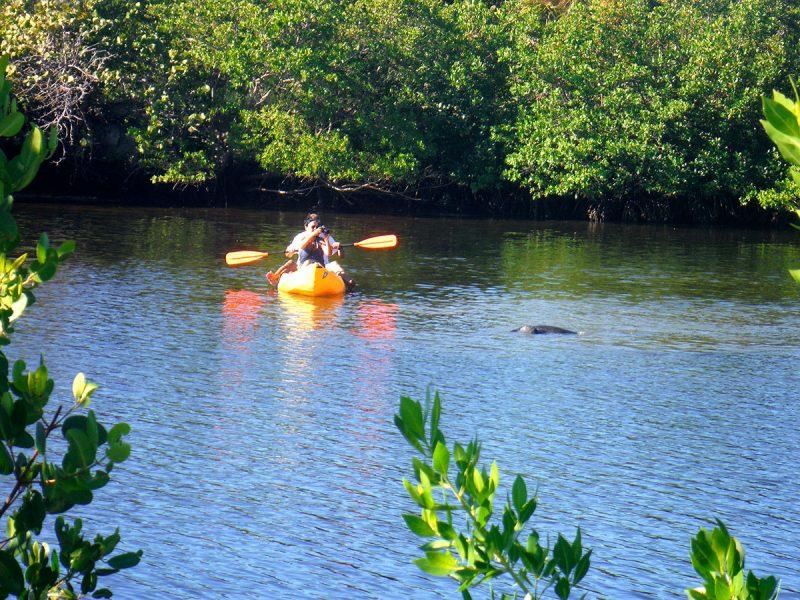 Where to See Manatees Florida