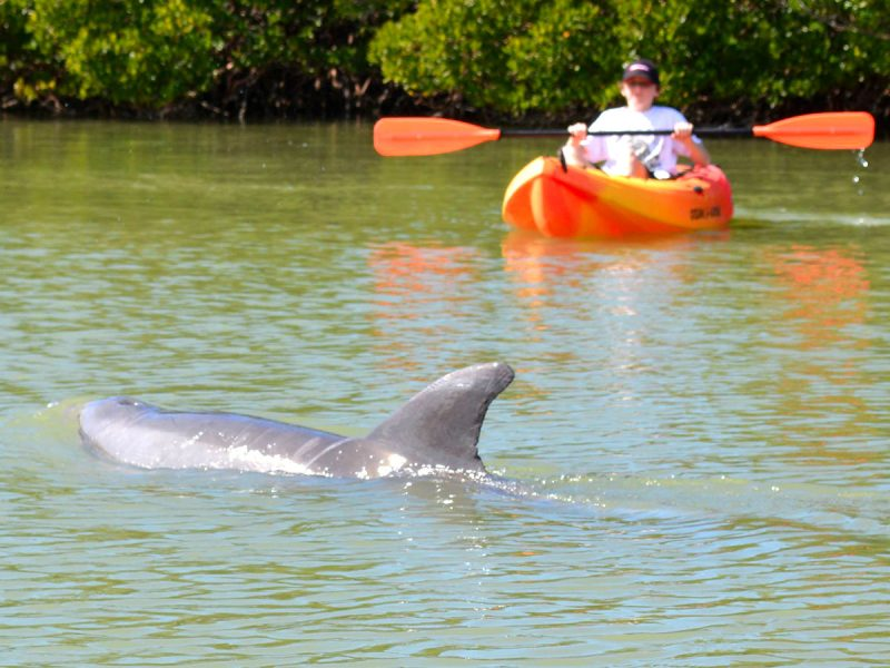 Where to see dolphins Fort Myers Florida