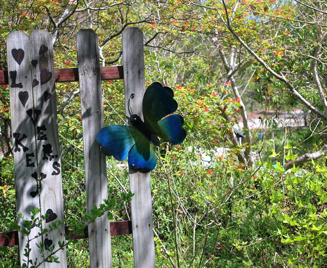 Wildlife and Butterfly Spotting in Southwest Florida